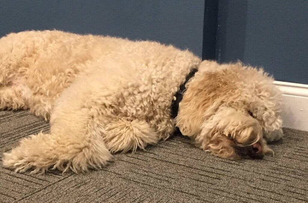"Murphys Monday Musing: Don't Let Sleeping ""Dogs"" Lie"